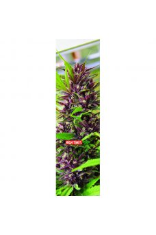 Mob - High Times Harvest Sour Grape 9in x 33in